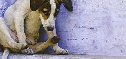 Diario di un accalappiacani. Un giovane dà la caccia ai cani randagi, in una storia ispirata alle recenti cronache di Bucarest. Di Marco Innocenti